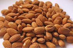 Almond Testing
