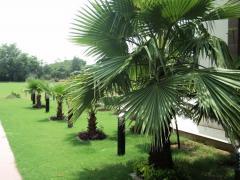 Landscape Construction Services