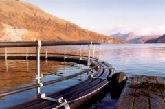 Aquaculture Consultancy
