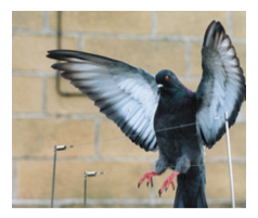 Bird Netting Services