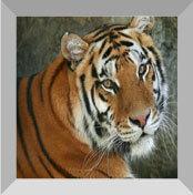 Exotic tours - Central India jungle Safari