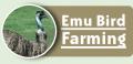 Emu Bird Farming