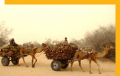 Domestic tours - Bikaner