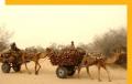 Domestic tours - Bikaner